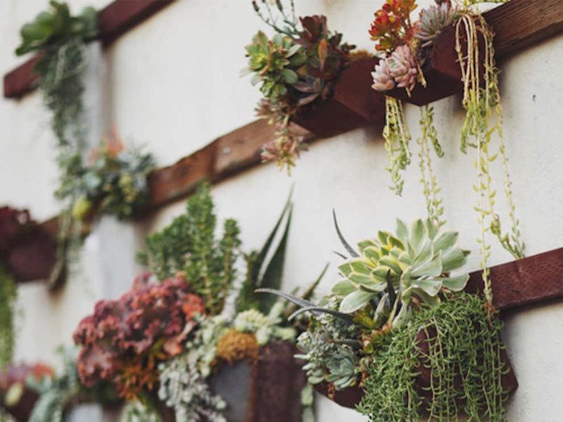 OXYGNNASA确定的六种净化空气的植物