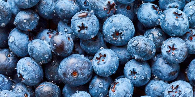 OXYGN5种最棒的超级食品及其入选理由(1)